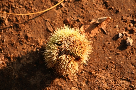 Chestnut on the ground with hard shadow on his left