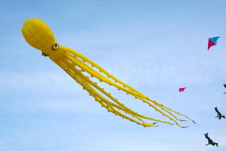 Octopus kite in a sunny day of summer