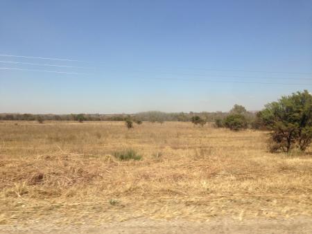 gauteng: Gauteng bushveld