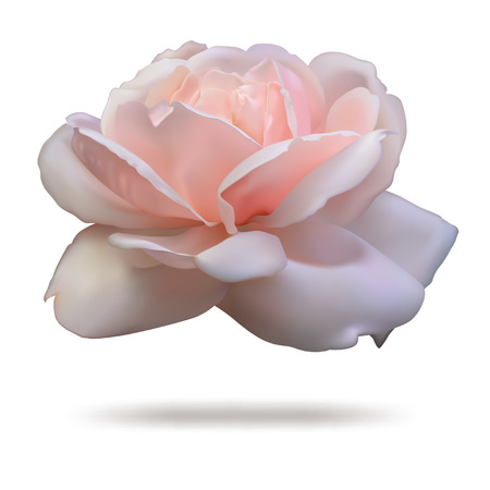 Pink rosebud isolated on white background in vector format. Zdjęcie Seryjne - 32893290