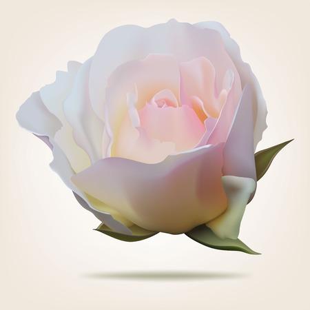 Pink rosebud isolated on white background Ilustracja