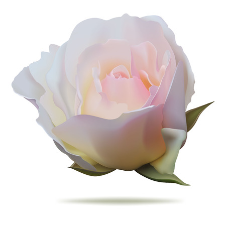 Pink rosebud isolated on white background Ilustracja
