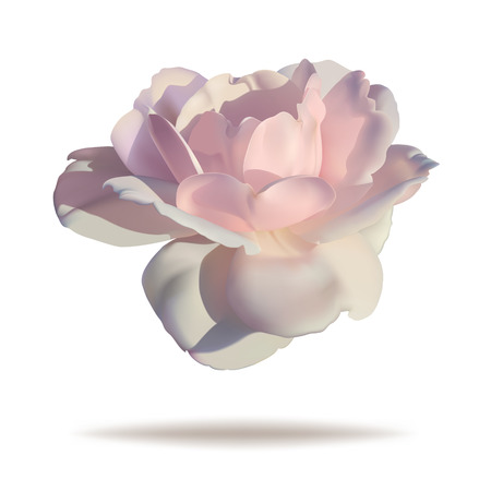 Pink rosebud isolated on white background in vector format. Zdjęcie Seryjne - 45760345