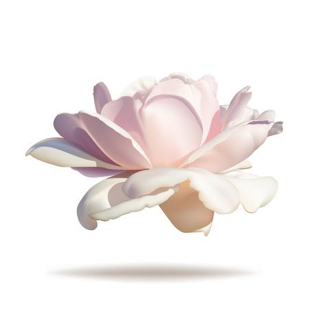 rosebud: Pink rosebud isolated on white background in vector format.