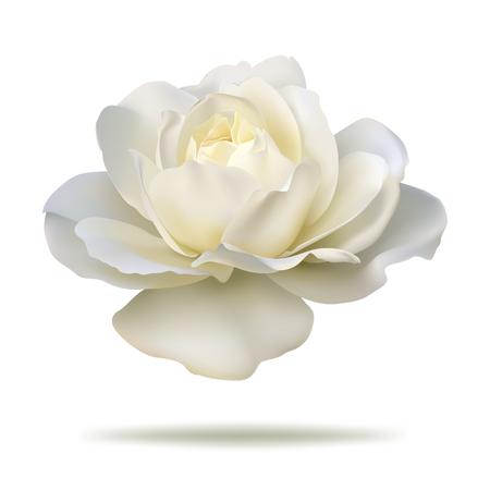 rosebud: white rosebud isolated on white background in vector format.