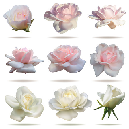 Set of pink and white rosebuds in vector format