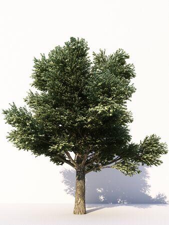 Bäume isoliert auf weißem Hintergrund, tropische Bäume isoliert für Design, Werbung und Architektur. 3D-Rendering Standard-Bild