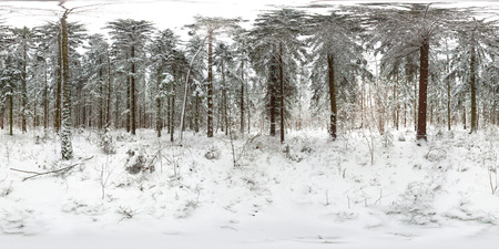 Full equirectangular projection. 3D spherical panorama of winter forest with snow and pines with 360 degree viewing angle. Ready for virtual reality in vr. Beautiful background. 版權商用圖片