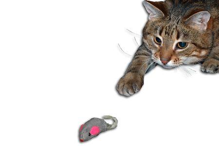 Cat Hunter  Standard-Bild - 279699