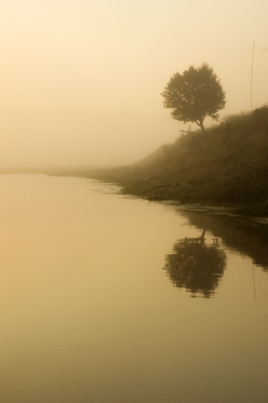 Lonely tree and foggy morning photo