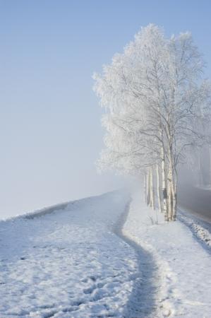 Winter Baum Standard-Bild - 14165356