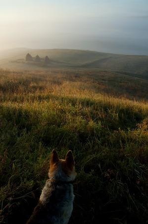 Hund in einem Feld. Schöner Sonnenaufgang Standard-Bild - 72357402