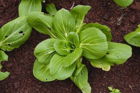 excludes: La verdura sostantivo significa un vegetali commestibili o parte di un impianto, ma esclude di solito semi e frutta pi� dolce. Ci� significa in genere la foglia, fusto, o radice di una pianta.