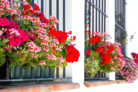 beautifully filled flower pots give extra atmosphere to the white houses in Andalusia, Spain