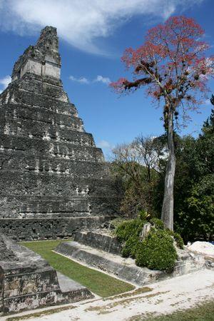 De beroemde Maya ruines van Tikal in Guatemala