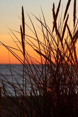 duskiness: Grass and sunset Stock Photo