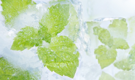 Ice mint photo