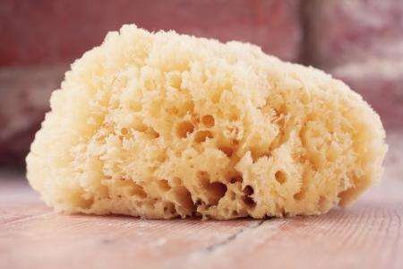 sponge: natural bath sponge Stock Photo