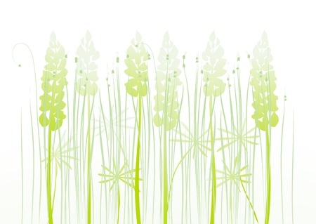 lupine: floral background, meadow, lupine Illustration
