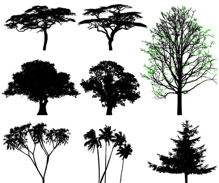 baobab: trees - vector set Illustration