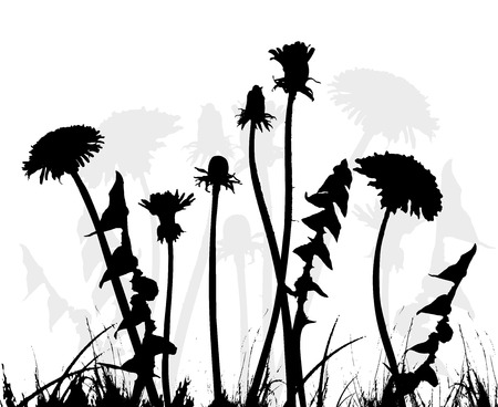 dandelion, collection for designers - vector Vector
