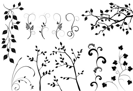 ivy: collection for designers, plant vector
