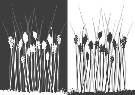Set of vector grass silhouettes backgrounds for design use Stock Vector - 4892243