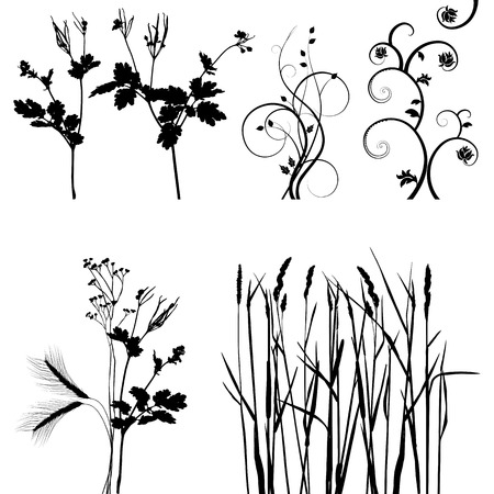collection for designers, plant vector Vector