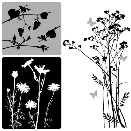 real plants silhouette - vector set Vector