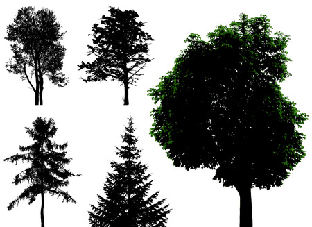 yew: trees - vector set Illustration