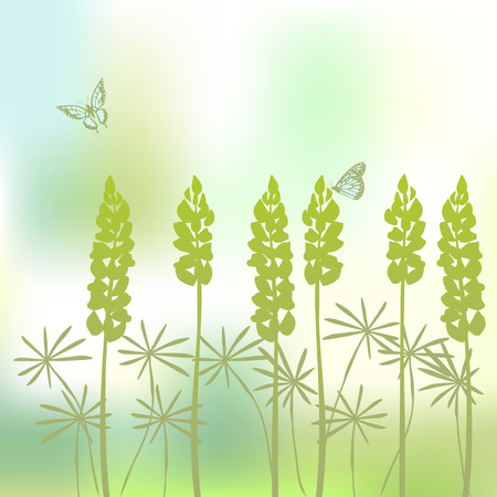 Background from flower of the lupine Vector