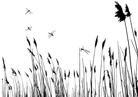 rietkraag: echt gras silhouette - vector - twee kleuren Stock Illustratie