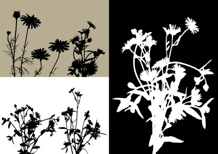 rose bush: collection for designers, plant vector