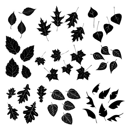 Leaf, collection for designers Vector
