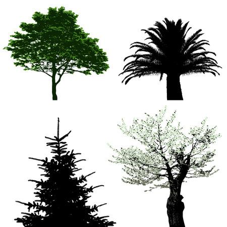 yew: trees  Illustration