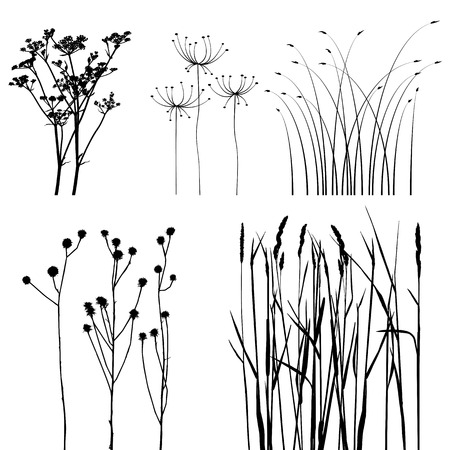 barley field: collection, for designers, plant  Illustration