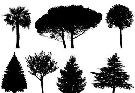 spruce: conjunto de �rboles  Vectores