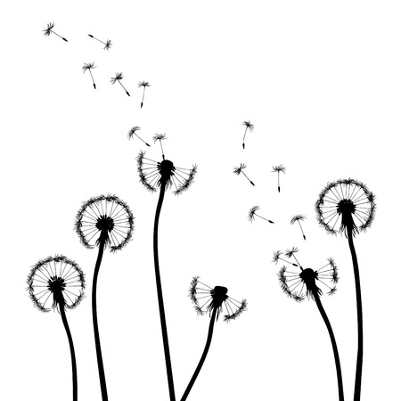 dandelion abstract: collection, for designers, plant  Illustration