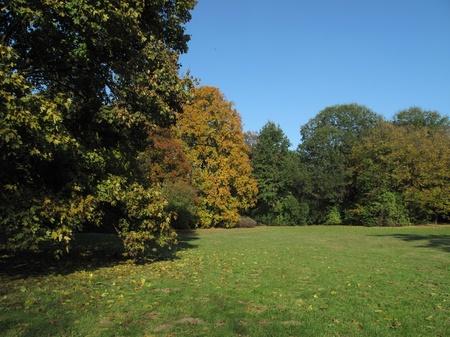 arboles frondosos: Otoño en el parque con niebla y la luz