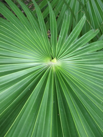 green big leaf - exotic plant  photo