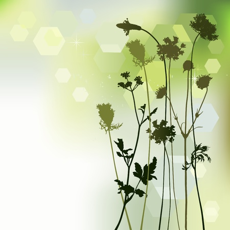 floral background, dandelion and herbal Vector