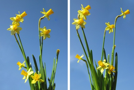 Set  Spring flowers on a background of blue sky  photo