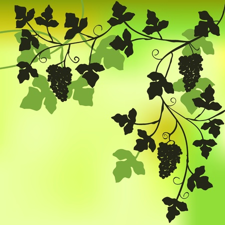 Bunch of grapes, plant background  Vector