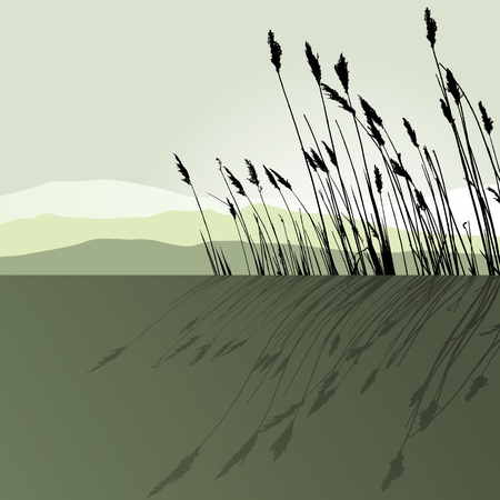 aquatic herb: Reeds in the water Illustration