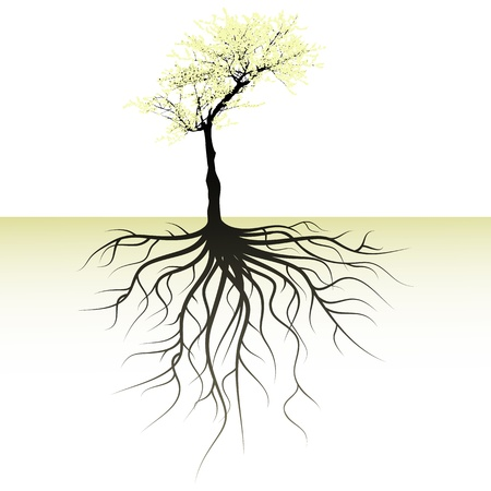 tree roots: blooming tree with a space for a text Illustration