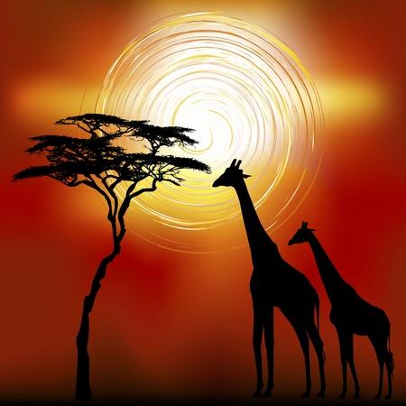 Sunset landscape vector: Hệ thực vật và động vật phong cảnh châu Phi trong thời gian hoàng hôn với hươu cao cổ Vector