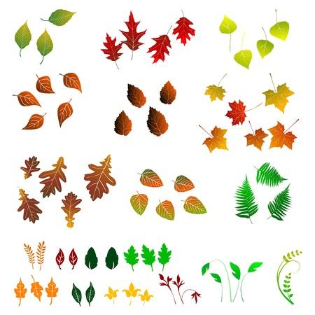 Leaf, collectie voor ontwerpers Stock Illustratie