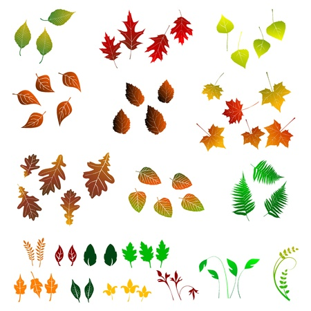 Leaf, collection for designers Stock Vector - 13410405