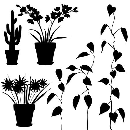 collection, for designers, plant vector Illustration