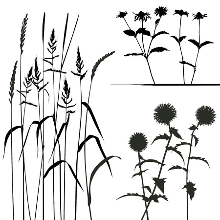 collection, for designers, plant Stock Vector - 14004488